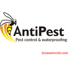The Most Affordable Pest Control Services in Chandigarh