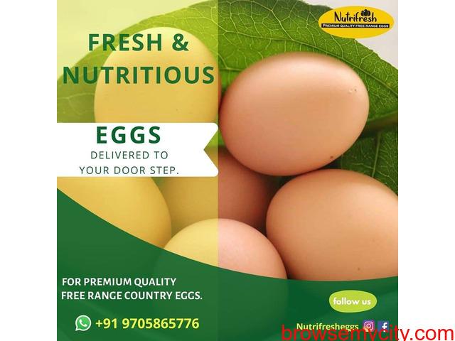 Premium FreeRange Eggs From Nutrifresh - 1/3