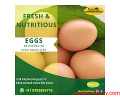 Premium FreeRange Eggs From Nutrifresh