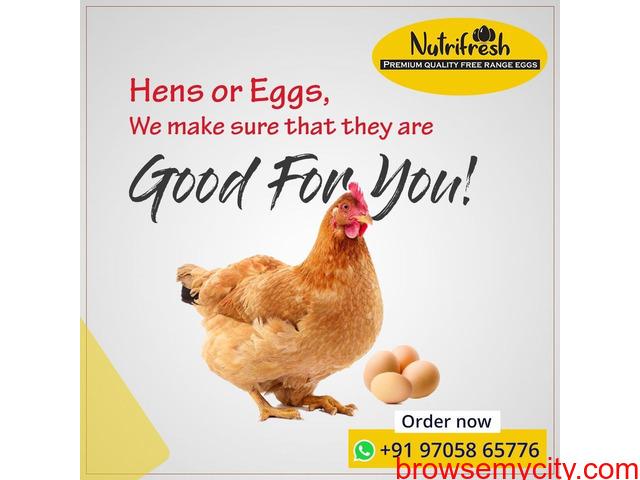 Premium FreeRange Eggs From Nutrifresh - 3/3