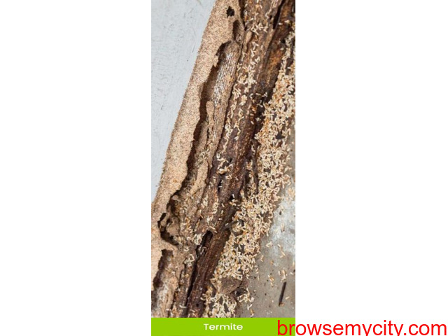 Best Termite Treatment in Mohali - Antipest Solutions - 1/2