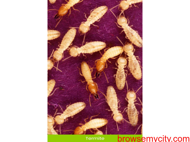 Best Termite Treatment in Mohali - Antipest Solutions - 2/2