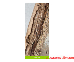 Best Termite Treatment in Mohali, Chandigarh and Panchkula