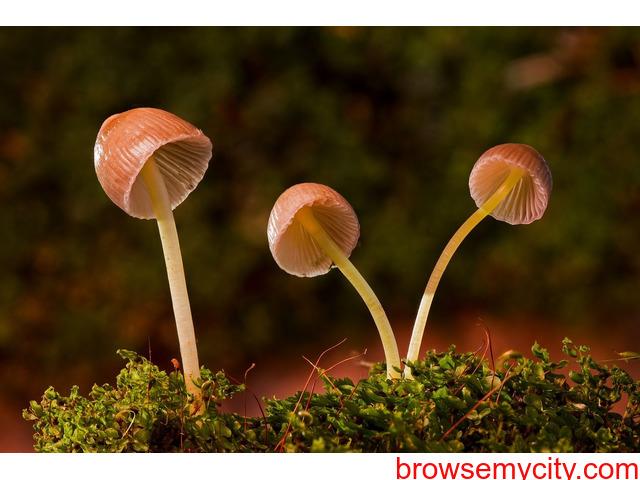 The Mushroom Courses - 1/1