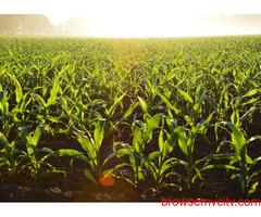 PGDM Agri-Business Management