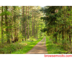 BSC FORESTRY ELIGIBILITY