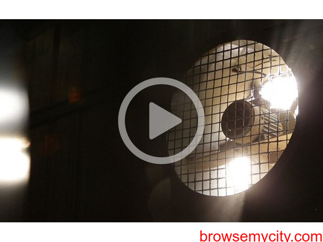 Best Explainer Video Company in Mumbai - Urbanblink - 1/1