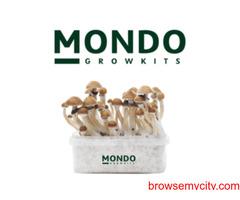 Shop for magic mushroom grow kits, Microdosing and magic truffles