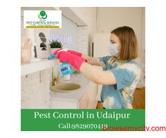 Pest Control in Udaipur