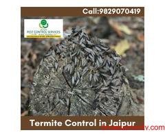 Termite Control in Jaipur