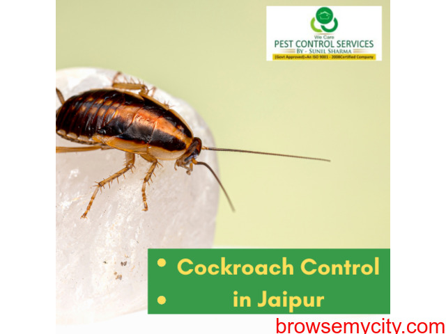 Cockroach Control in Jaipur - 1/1