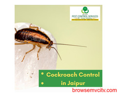 Cockroach Control in Jaipur