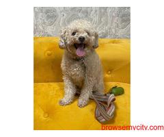 Best Pet Boarding in Delhi