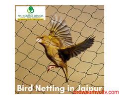 Bird netting in Jaipur