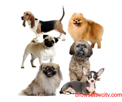 Activity Toys for Dogs, Puppies Online in India @ Best Prices
