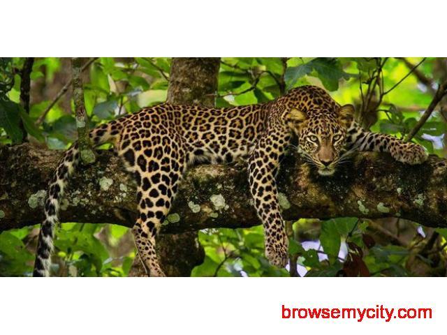 Best of Mysore – Nagarhole – Iruppu Falls - 25047