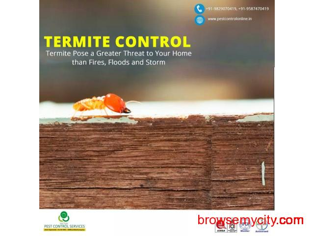 Make Your Home Termite  Free by Pest Control Service in Jaipur - 1/1